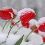 Mother's Day Weekend 2021 – More Snow on the Way!